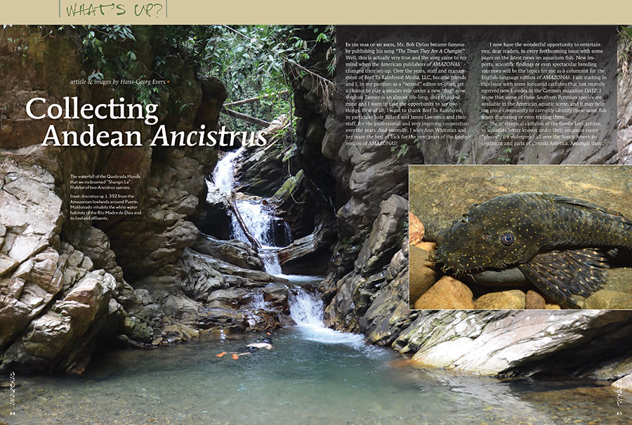 "Hans-George Evers introduces a host of new L-number plecos from the Andes in the first installment of his new ""What's Up?"" column, an AMAZONAS exclusive!"
