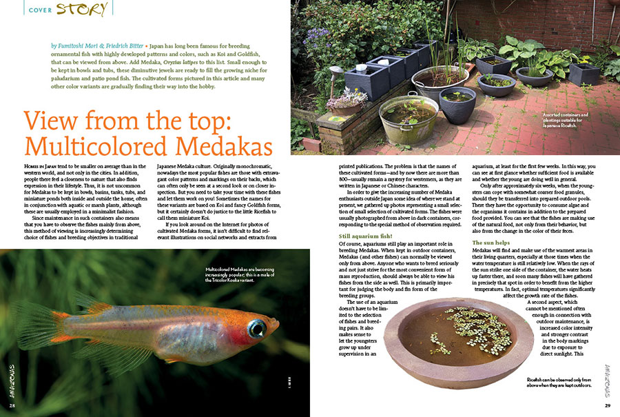 """When is the last time you thought about how a fish would appear when viewed from above? """"View from the top: Multicolored Medakas,"""" illustrates how these diminutive jewels are ready to fill the growing niche for paludarium and patio pond fish."""