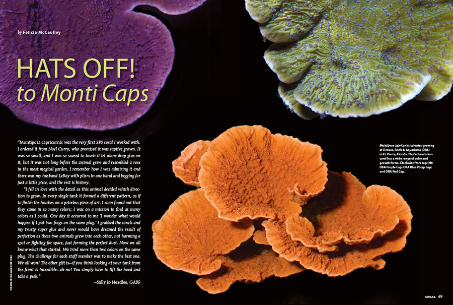 "CORAL contributor Felicia McCaulley, along with the support of many talented photographers and coral culturists, presents an unprecedented modern look at the ""Monti Caps"" in the September/October 2018 issue of CORAL Magazine. In the opening spread, clockwise from top left: ORA Purple Cap; ORA Blue Polyp Cap; and ORA Red Cap. Image credits Oceans Reefs & Aquariums (ORA)."