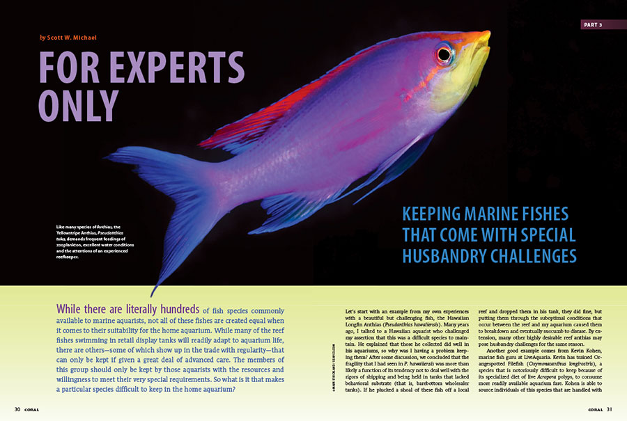 "Introducing our cover feature, Scott Michael writes, ""While there are literally hundreds of fish species commonly available to marine aquarists, not all of these fishes are created equal when it comes to their suitability for the home aquarium."" Find out what makes some species difficult to keep in aquariums, in ""For Experts Only."""