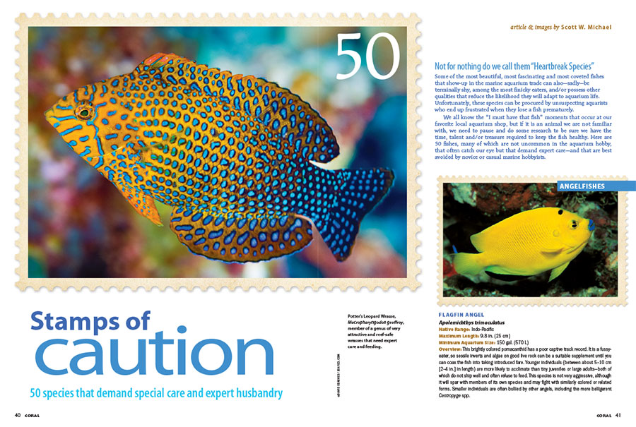 """Stamps of Caution,"" by Scott Michael, introduces 50 fishes, many of which are not uncommon in the aquarium hobby, that often catch our eye but that demand expert care—and that are best avoided by novice or casual marine hobbyists."
