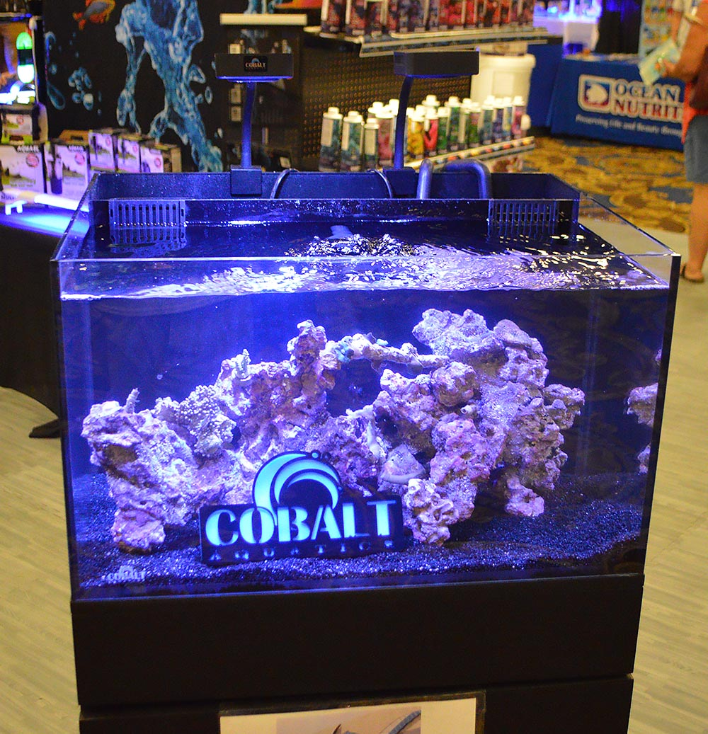 An all-in-one (AIO) fish tank on display by Cobalt.