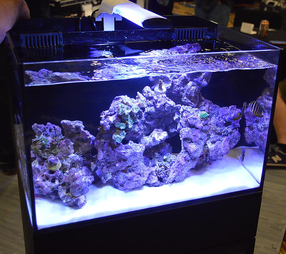 One more variation on the AIO aquarium by Cobalt Aquatics.