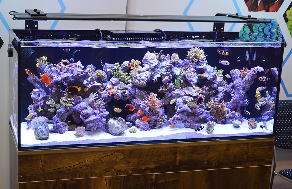 A closer look at this second aquarium full of corals and captive-bred fish by ORA.