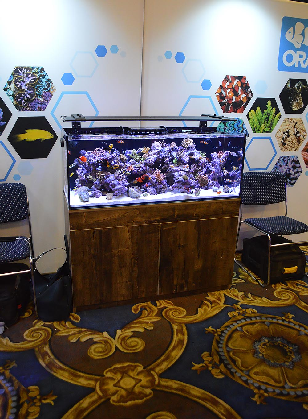 ORA's impressive display of cultured fish and coral would look fantastic in a home or office.