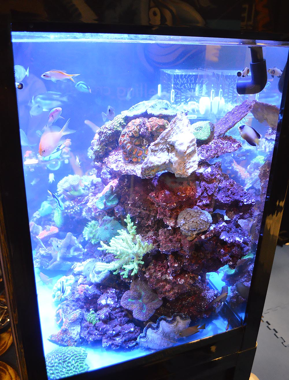 A look at SDC's reef display from the side.