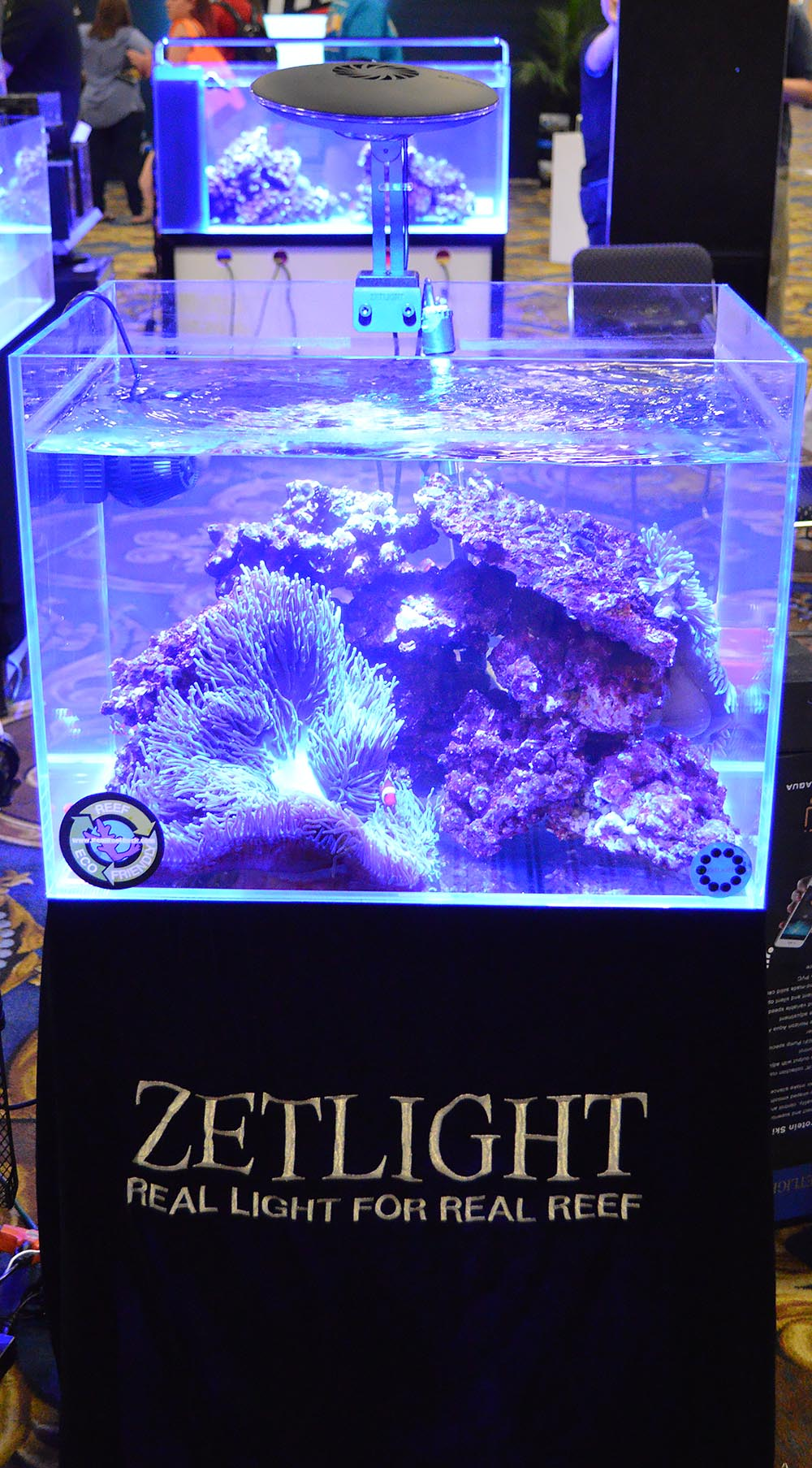 Simple and effective - a clownfish and anemone dominate this modestly-sized aquarium display by Zetlight & Ming Trading.