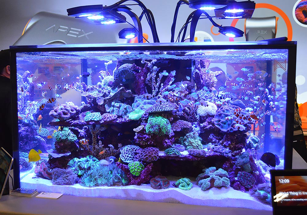 Another closer look at Neptune's reef aquarium.