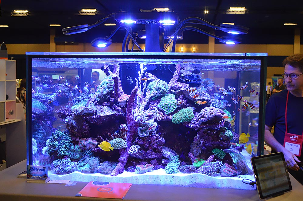 Neptune's reef aquarium was overflowing with colorful fish and corals; here viewed from a third vantage point.