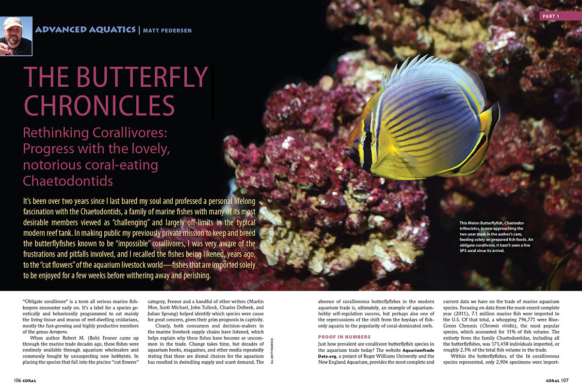 Advanced Aquatics: The Butterfly Chronicles, Part 1, by Matt Pedersen, as published in the November/December 2018 issue of CORAL Magazine