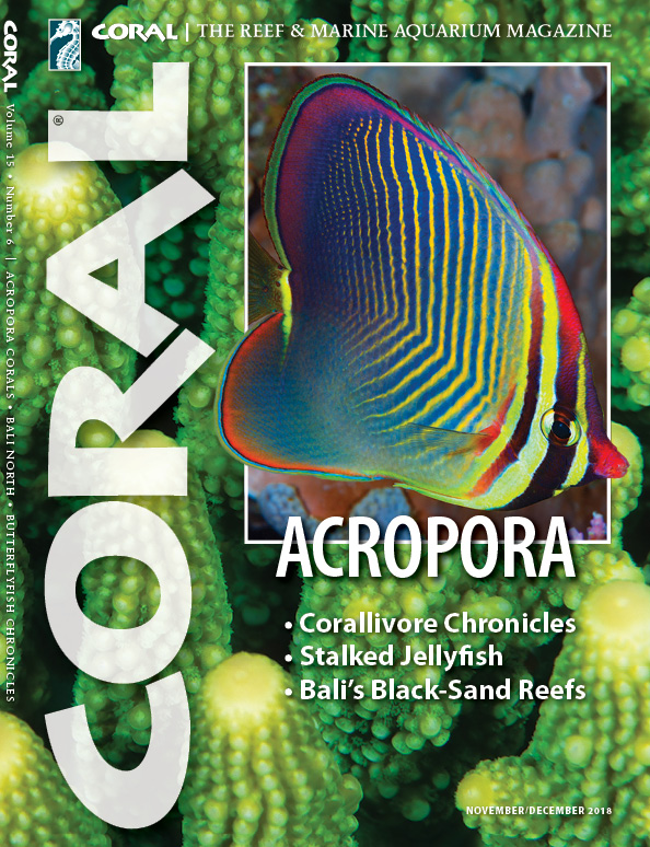 The cover of CORAL Magazine Volume 15, Issue 6 – ACROPORA – November/December 2018. On the cover: Triangle Butterflyfish, Chaetodon triangulum. In the background: Acropora humilus. Both by Gary Bell, OceanWideImages.com