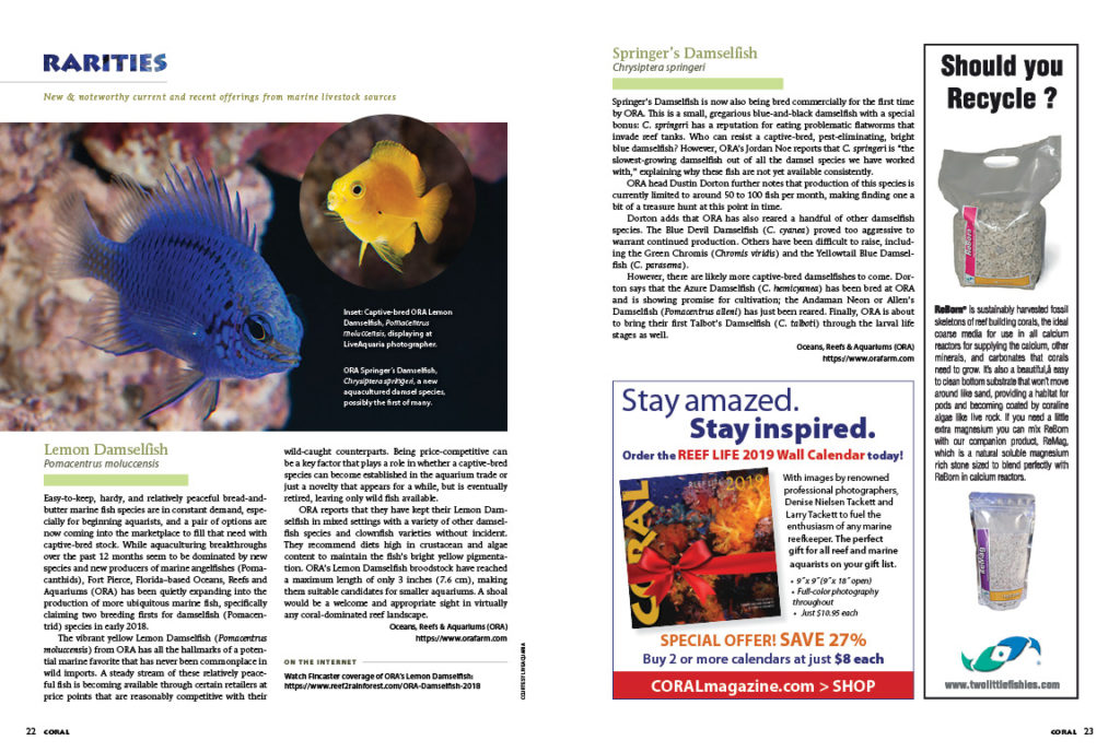It's an aquacultured bonanza for this issue's Rarities column, with stories of ORA's new Damselfish releases, beautiful corals from A&M Aquatics, and Sea & Reef Aquaculture's stunning release of their long-awaited Longfin Clownfish variety.