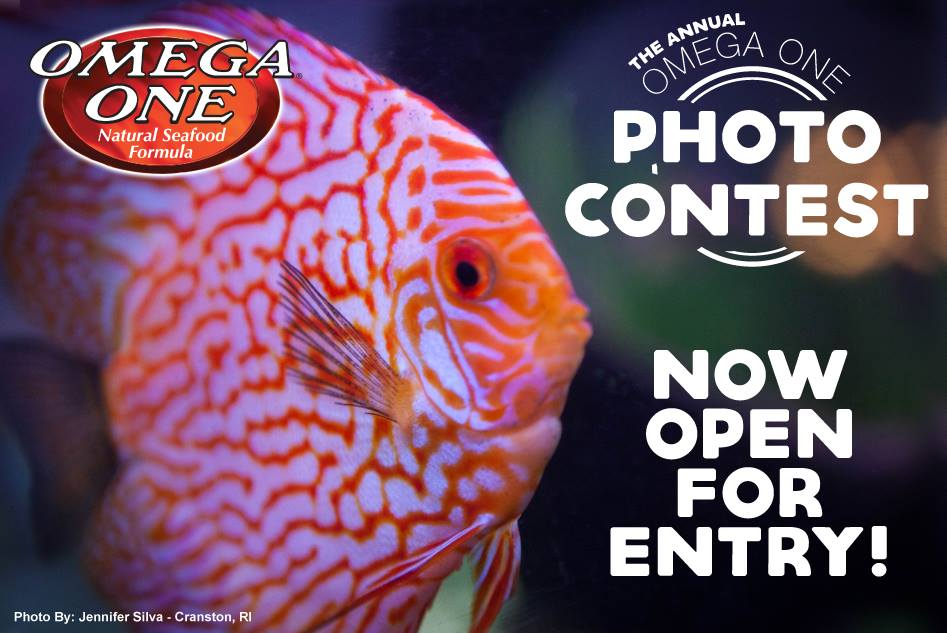 The Omega One Photo Contest closes October 31st, 2018.