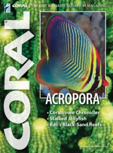 Readers of this article in the November/December 2018 issue of CORAL get to experience a lavish pictorial of stunning Acropora cultivars. Don't miss out: click to order this back issue for your collection.