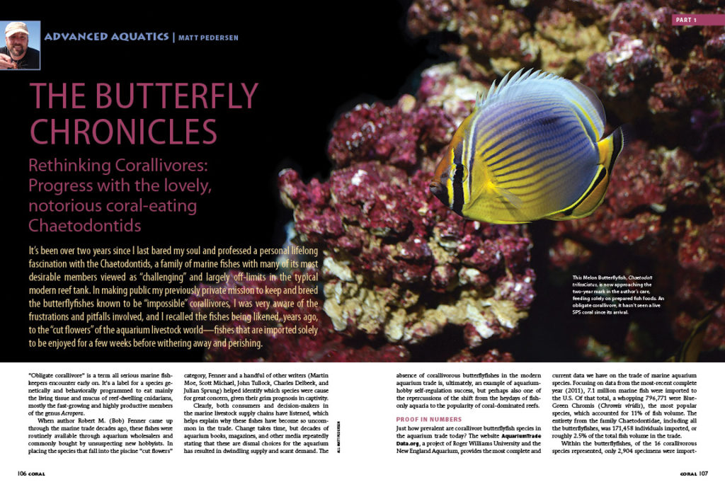 "Our issue closes with Advanced Aquatics, featuring Part I of Matt Pedersen's Butterflyfish Chronicles: Rethinking Corallivores: Progress with the lovely, notorious coral-eating Chaetodontids. Are these fish still best considered ""cut flowers"", destined to quickly wither and perish in our aquariums? Read on to find out."
