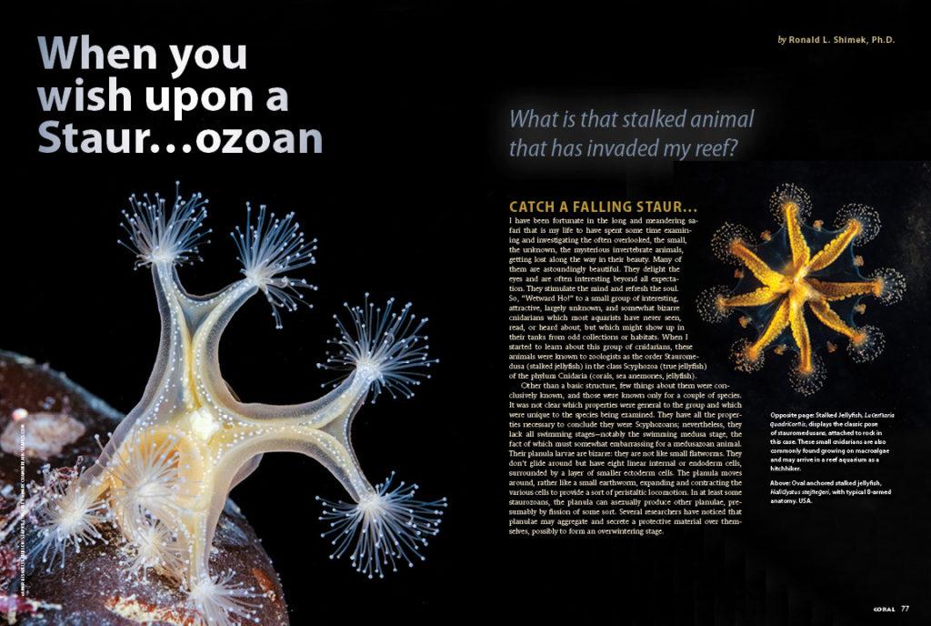 What is that stalked animal that has invaded my reef? Dr. Ron Shimek introduces the Staurozoans.