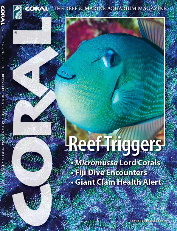 "The cover of CORAL Magazine Volume 16, Issue 1 – REEF TRIGGERS – January/February 2019. On the cover: A female Bluethroat Triggerfish, Xanthichthys auromarginatus, by award-winning Australian photographer Gary Bell, OceanWideImages.com. In the background, an ""Acan Lord"", Micromussa lordhowensis, by Daniel Knop."