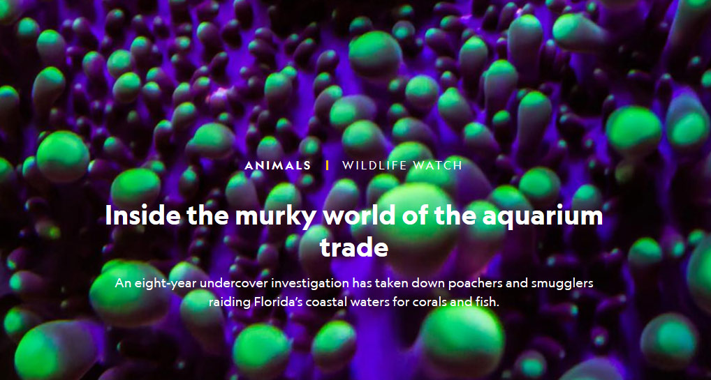 Inside the murky world of the aquarium trade An eight-year undercover investigation has taken down poachers and smugglers raiding Florida's coastal waters for corals and fish. By Rene Ebersole, National Geographic.