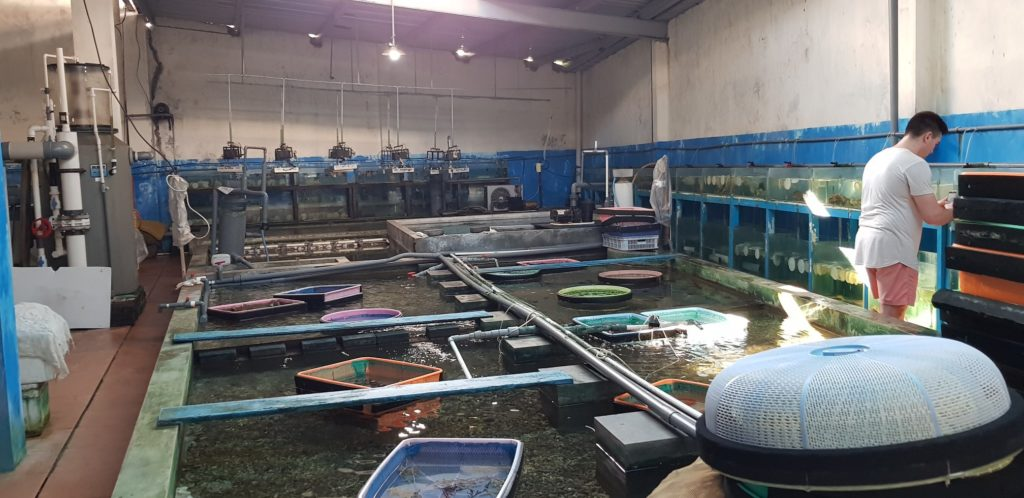 Any inability to export coral means tanks and raceways are bare, and people are out of work in Indonesia's marine aquarium livestock trade. Image credit: OFI