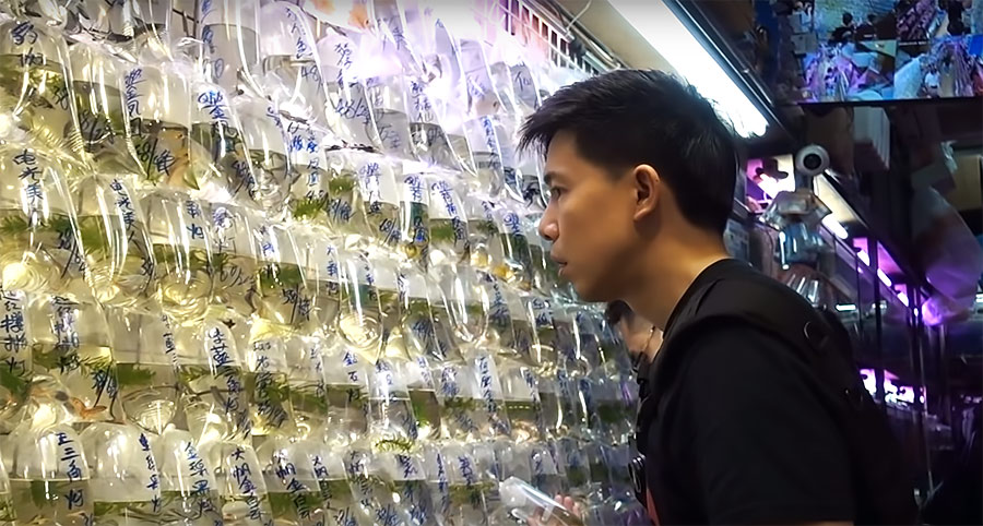 "Hanging bags of fish are all about a ""quick transaction"" according to Mok-Yi Chow; it's a grab-and-go affair. Bag water appears to be pristine, and the fish in apparent good health. Turnover is said to be high in Hong Kong's bustling aquarium marketplace."