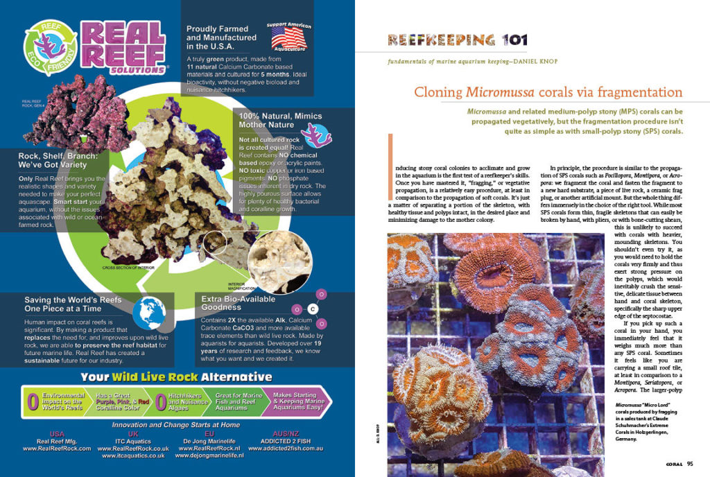 Discover the best way (and some far riskier methods) to propagate Micromussa corals in this issue's Reefkeeping 101 column.