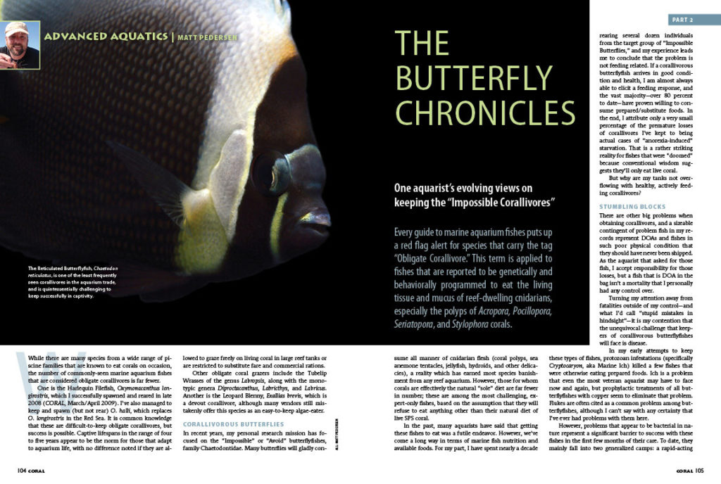"If you think that getting the expert-only or ""doomed"" obligatory corallivorous butterflyfishes to eat in captivity is the biggest hurdle to their long-term success, Matt Pedersen has some surprising viewpoints to share in Part II of The Butterfly Chronicles."