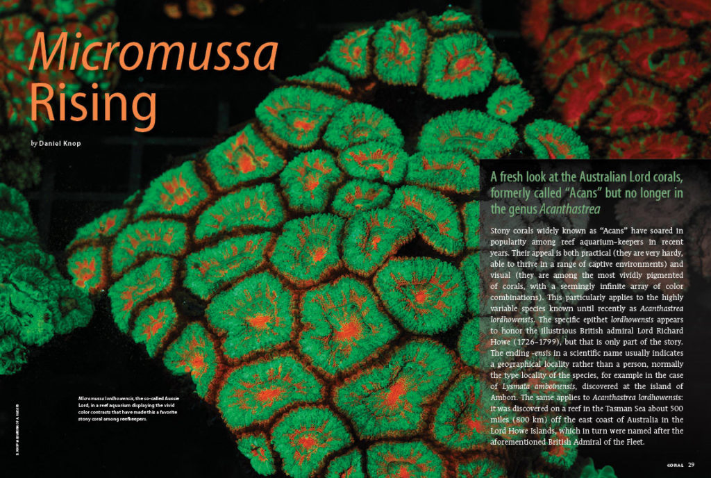 "Daniel Knop offers a fresh look at the Australian Lord corals, formally called ""Acans"" but no longer in the genus Acanthastrea. Learn more in his article, Micromussa Rising."