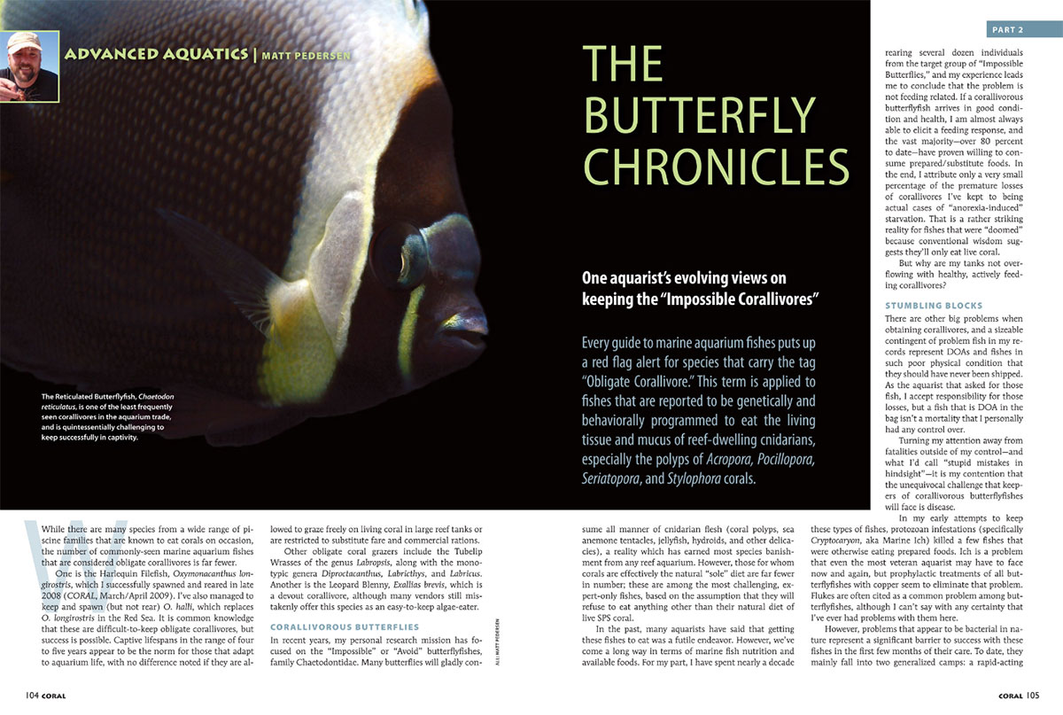 Advanced Aquatics: The Butterfly Chronicles, Part 2, by Matt Pedersen, as published in the January/February 2019 issue of CORAL Magazine.