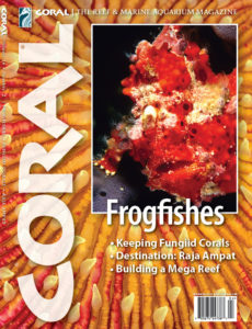 The cover of CORAL Magazine Volume 16, Issue 2 – FROGFISHES – March/April 2019. On the cover: Warty Frogfish, Antennarius maculatus by Scott W. Michael. Background: Disk Coral, Fungia sp. by Doug Perrine / SeaPics.com