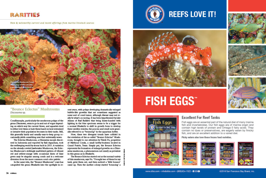 Whether it's the Nursalim Flasher Wrasse, unusual Heteractis anemones, the out-of-the-ordinary Wrinkle Coral, or the unheard of Bounce Eclectus Mushroom, CORAL's RARITIES column is sure to get your pulse racing.