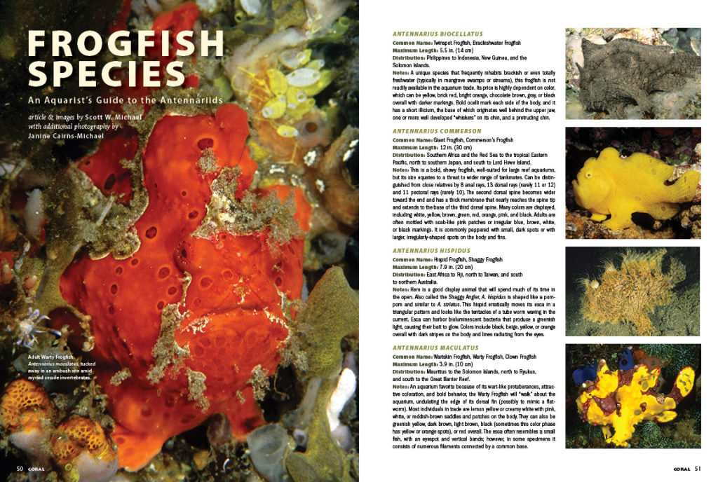 Scott Michael presents an authoritative guide to the many Frogfish species you're likely to encounter as an aquarist.