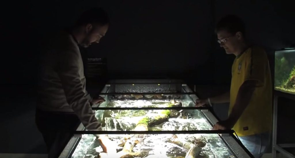 Leandro Sousa and Mark Sabaj Peréz standing over the iconic river-rapids aquarium at the Panta Rhei Fishhouse in 2013.