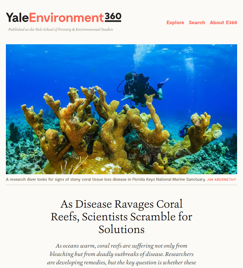 As Disease Ravages Coral Reefs, Scientists Scramble for Solutions - read the article from Yale Environment 360.