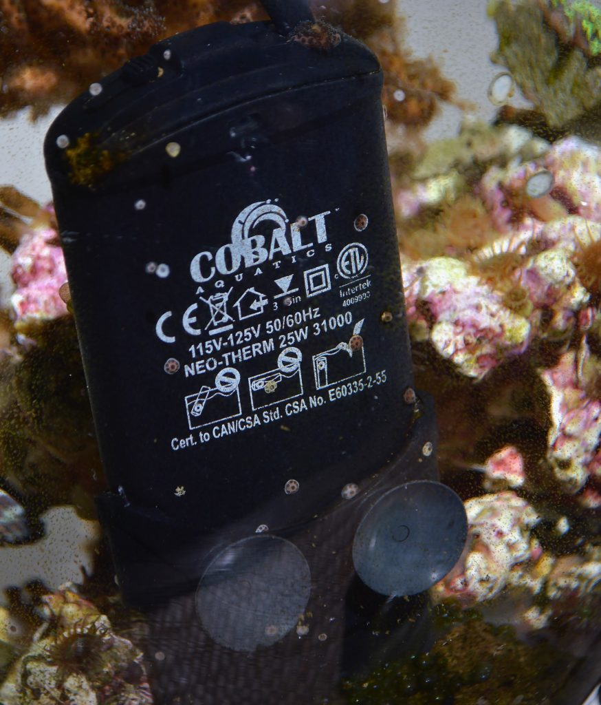 Who knew that Colbalt's Neotherm heaters made such excellent coral settlement substrate.
