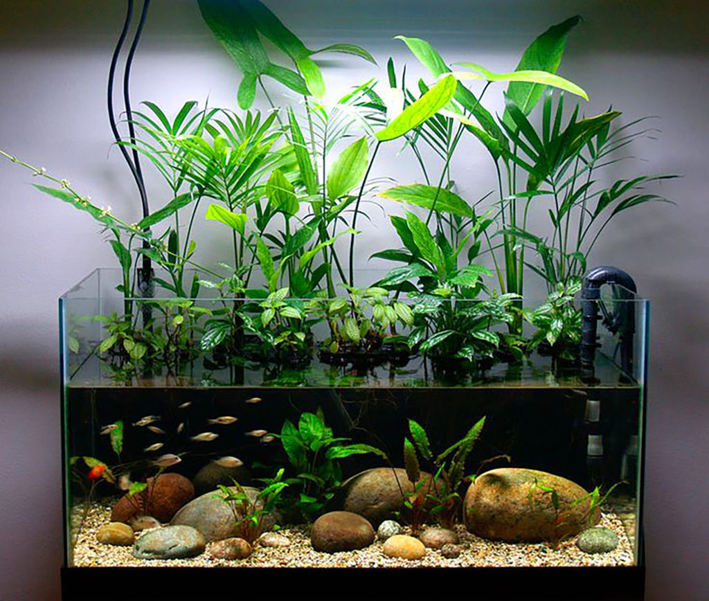 50-gallon Planted Riparium