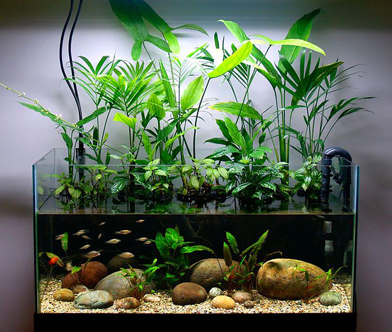 Easy To Find Houseplants As Riparium Foliage