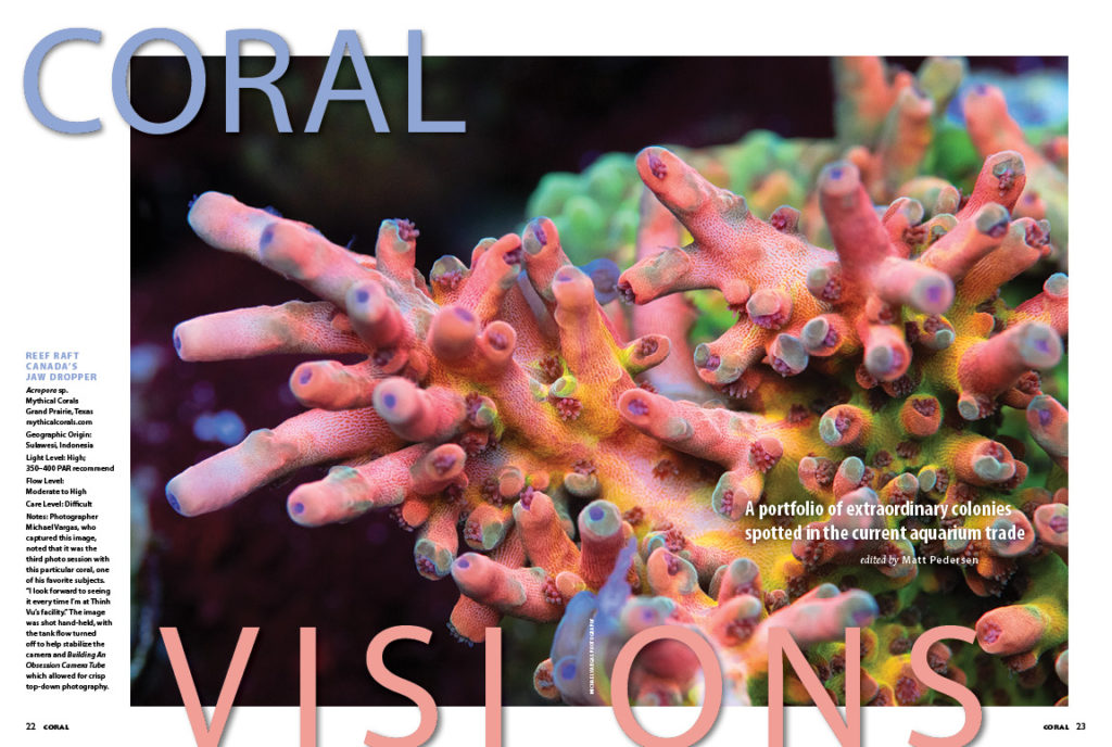 Our CORAL VISIONS column returns with a splash this issue, opening with Michael Vargas' stunning photograph of a Reef Raft Canada Jaw Dropper Acropora at Mythical Corals. Turn the pages to see what other amazing coral selections grace the pages this issue!
