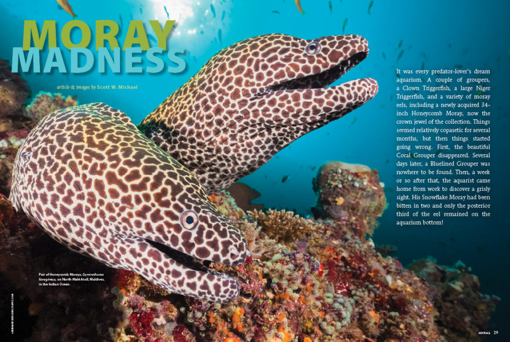 Scott Michael has a case of Moray Madness! He shares everything you need to know about the husbandry of this diverse group of eels.