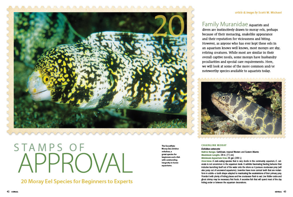 Once you understand how to keep a moray eel in your aquarium, refer to Scott Michael's Stamps of Approval: 20 Moray Eel Species for Beginners to Experts, to select the ideal eels for your tank!
