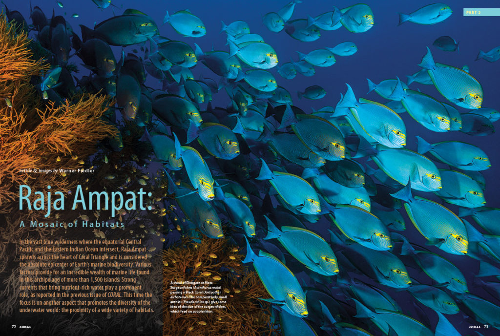 In our second installment from travel photojournalist Werner Fiedler, you'll dive the many diverse habitats all found in close proximity at Raja Ampat.