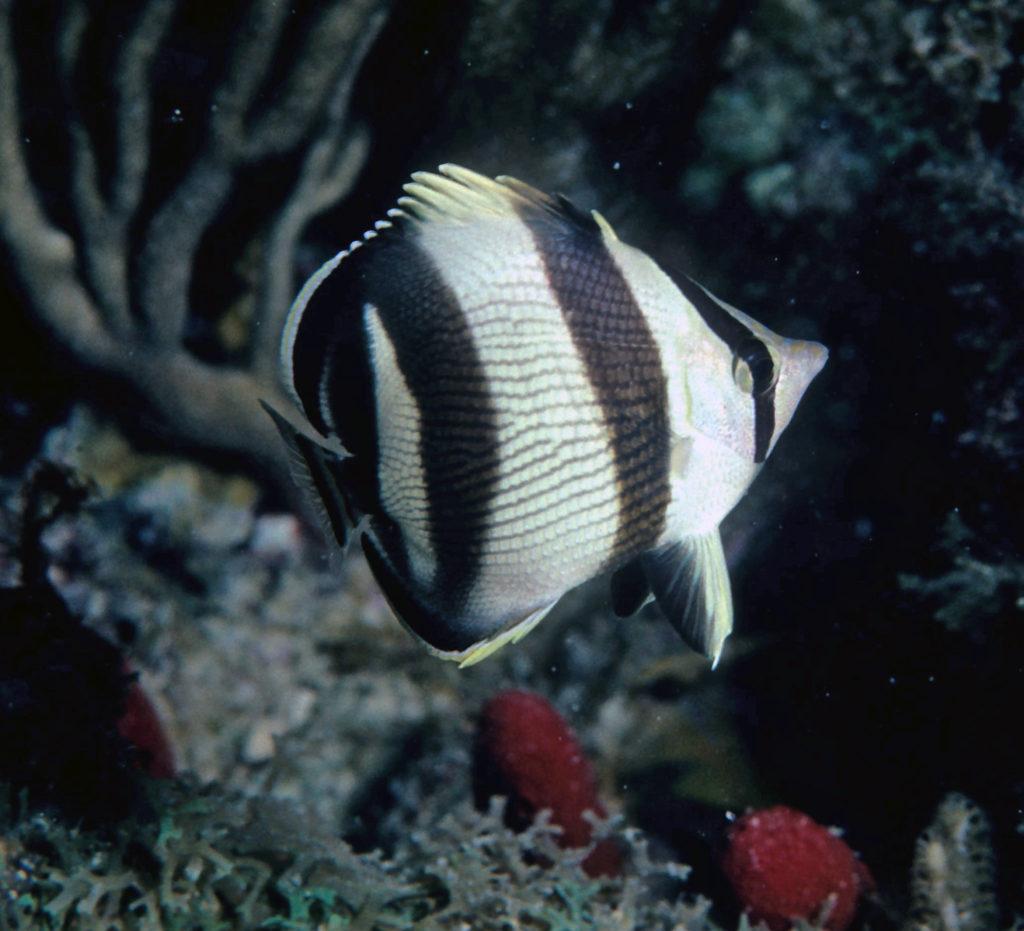 Photo credit: NOAA