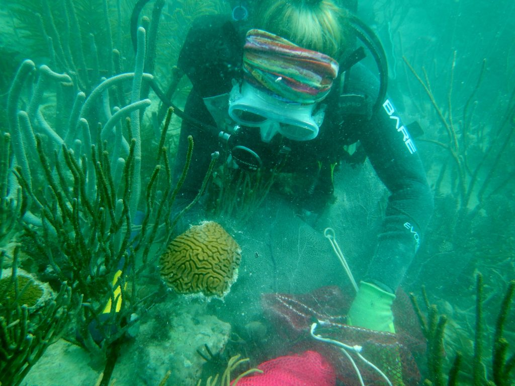 A FWC coral biologist places a brain coral, Diploria labrynthiformes, into a mesh collection bag. - Image via FWC - CC BY-NC-ND 2.0