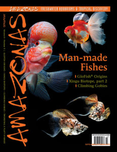 An excerpt from the September/October 2019 issue of AMAZONAS Magazine, MAN-MADE FISHES. Click to order the back issue!