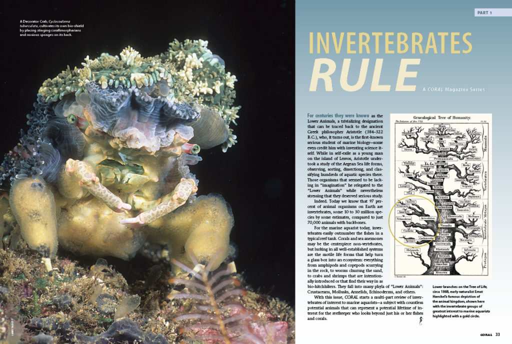 With this issue, CORAL starts a multi-part review of invertebrates of interest to marine aquarists—a subject with countless potential animals that can represent a potential lifetime of interest for the reefkeeper who looks beyond just his or her fishes and corals.