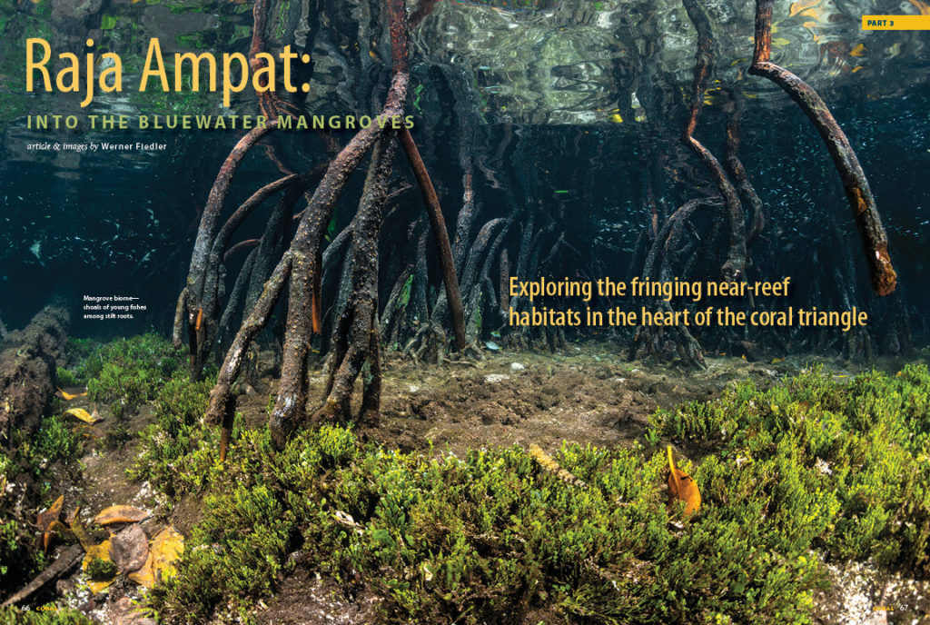 "In our final installment, Werner Fiedler brings us to a lush coastal habitat. Journey to the mangrove biome, or mangal, in ""Raja Ampat Part 3: Into The Blue Water Mangroves."""