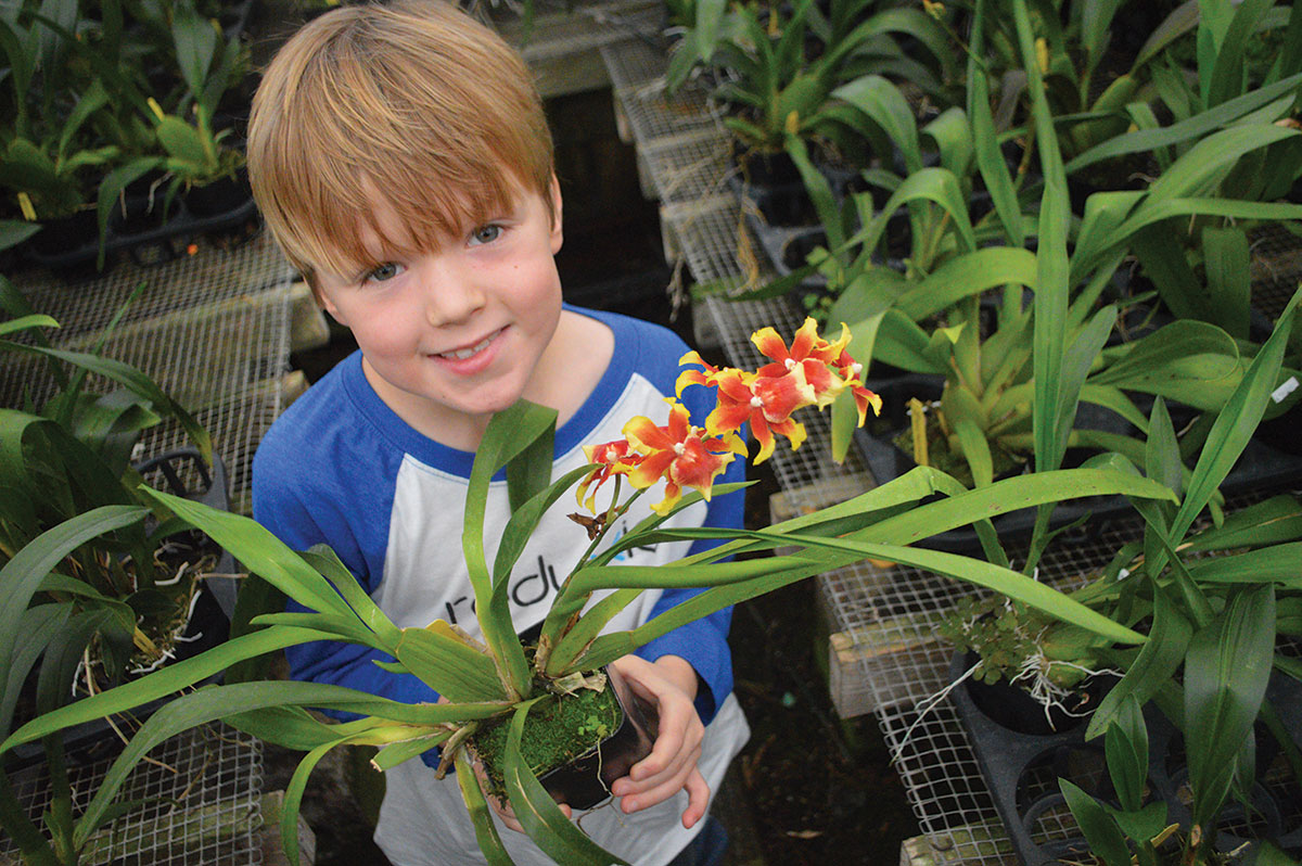 During a visit to Orchids by Hausermann in Villa Park, IL, Ethan Pedersen was immediately drawn to this Miltonidium Pacific Waters 'Paul's Pride', blissfully unaware of its intergeneric hybrid origin; he just likes the mixture of colors. Photo: M. Pedersen