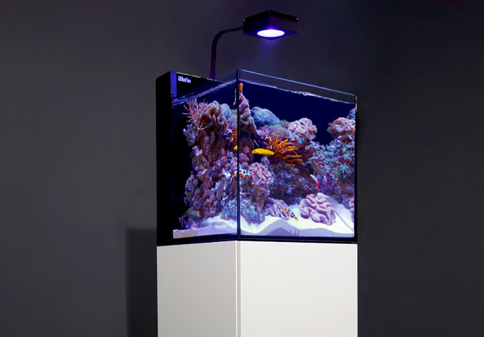 Red Sea's MAX NANO show here with the ReefLED 90 lighting system.
