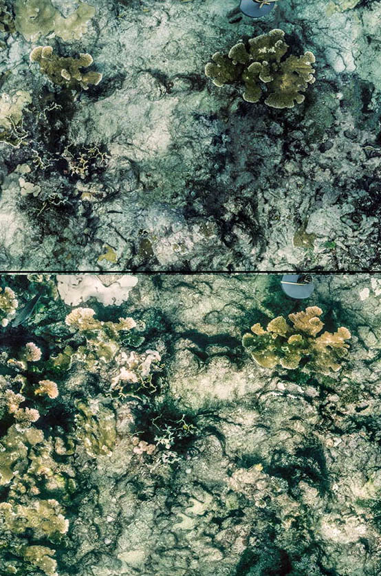 From the paper: A healthy reef in June 1997 (above) and a severely diseased, but unbleached, reef at the same location (Eastern Dry Rocks) in September 1997 (below). A large panoramic version is available in the open-access paper! Image credit: James Porter