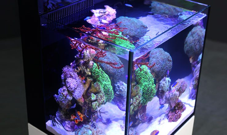 Ultra clear glass is just one of the many high-quality components in a Red Sea MAX NANO all-in-one reef aquarium system.