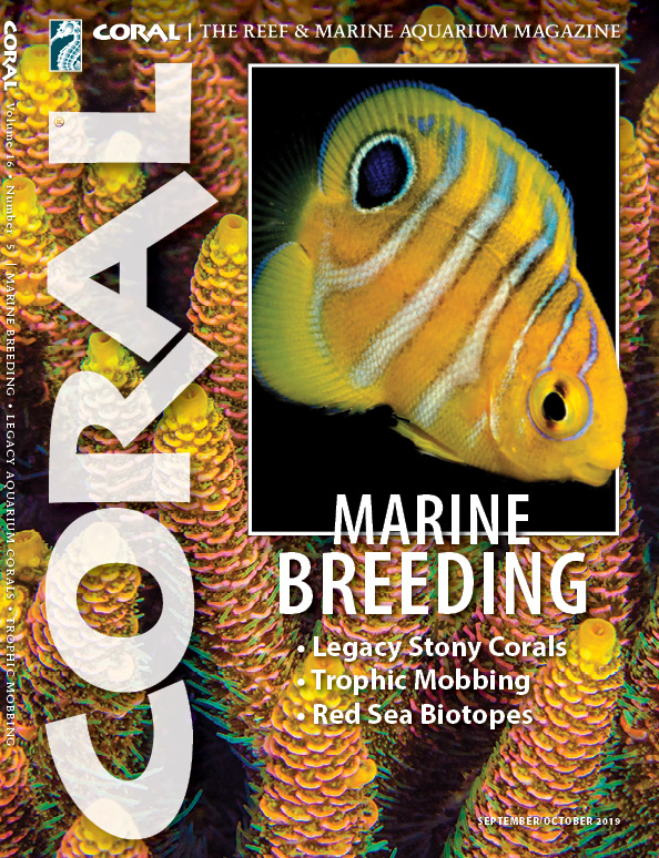 The cover of CORAL Magazine Volume 16, Issue 5 – MARINE BREEDING – September/October 2019. Juvenile Regal Angelfish,Pygoplites diacanthus, captive-bred by Bali Aquarich. Background: Mariculture broodstock Acropora millepora coral at Bali Aquarium, Indonesia. Image credits: Vincent Chalias/Bali Aquarium.